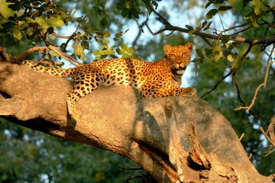 Botswana Flying Safari Parcs de Chobe & de l'Okavango avec Wilderness Safaris